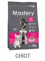 mastery chien chiot